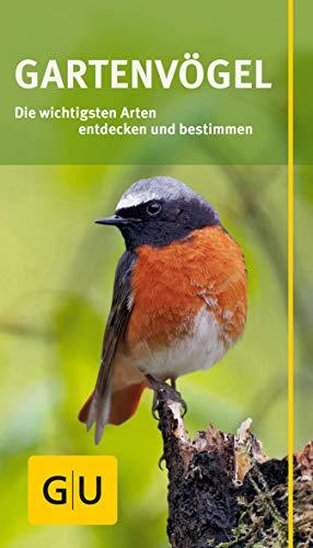 Gartenvögel: Die wichtigsten Arten entdecken und bestimmen