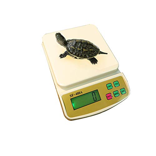 Digitale huisdier weegschaal, kleine huisdier weegschaal digitale reptiel gezondheid gewicht schaal