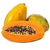 Pawpaw Seeds 10pcs Papaya Green Organic Tree Fruit Seeds para el jardín de su casa Jardín al aire libre Siembra de la granja