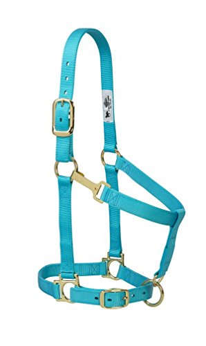 Weaver Leather Basic Adjustable Nylon Halter, Turquoise, 1' Average Horse