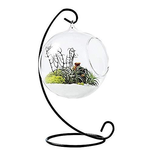 TJW Glas Vase zum Aufhängen Air Pflanze Terrarium Kit für vollmundigen Farn Moos Bonsai Blume 1 Ball