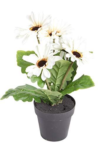 JSC künstliche Edel-Gerbera mit 5 Blüten im schwarzen Kunststofftopf (Creme)