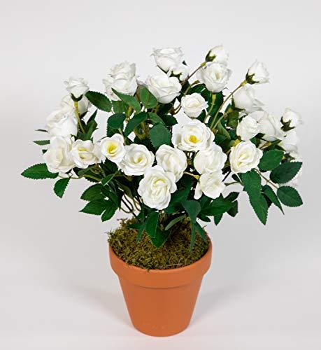 Seidenblumen Roß Rosenbusch 30cm weiß im Topf ZF Kunstpflanzen Kunstblumen künstliche Blumen Rosenstrauch Rosen