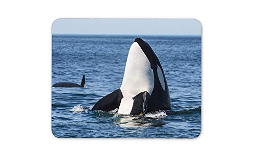 Orca Whale Mouse Mat Pad - Killer Whales Sea Creatures Computer #14212