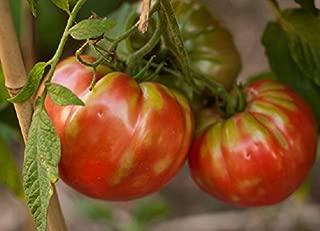 Collection of 6 Heirloom Tomato seed varieties - German Pink, Black Krim, Abe Lincoln, Black Mountain Pink, Yellow Brandywine, Mr. Stripey