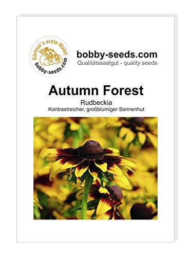 Autumn Forest Rudbeckiasamen von Bobby-Seeds Portion