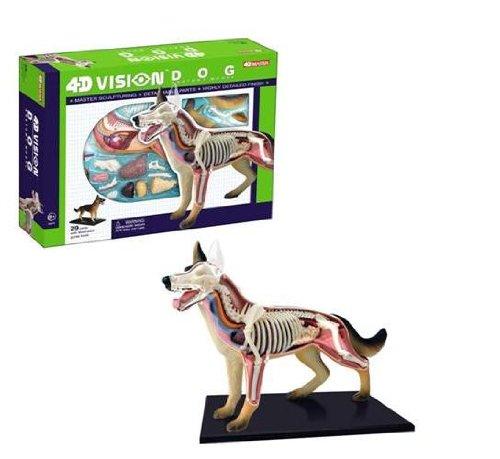 4D Dog Anatomy Model