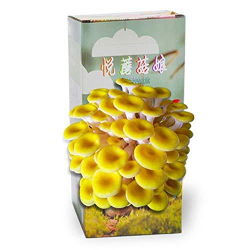 Rowe Semillas de Hongos orgánicos para Interiores Spores Plant Showing Kit de Cultivo, Kits de Crecimiento de Hongos para jardineros para el hogar, encimera, Mesa o Bonsai (Color : A)