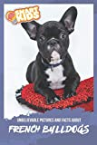 Unbelievable Pictures and Facts About French Bulldogs