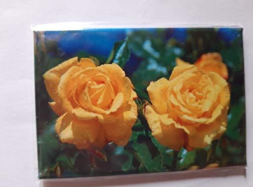Schöning Magnet Rosen, 8 x 5,5 cm, Kühlschrankmagnet Blume Blumen Rose