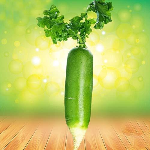 Bloom Green Co. bonsaïs Le fruit Livre vert Fruits et légumes Radis Balcon long Radis Potted de/pack