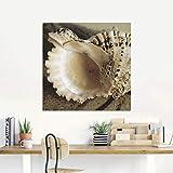 Artland Qualitätsbilder I Glasbilder Deko Glas Bilder 20 x 20 cm Tiere Wassertiere Muschel Foto Creme A5MZ Strandimpressionen II – Muscheln - 3
