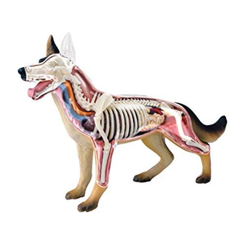 Modelle Hund Wolf Anatomisches Tier Biologie Skelett Anatomie Der Körper 29 Abnehmbare Puzzle Connection On Toys Medical Education