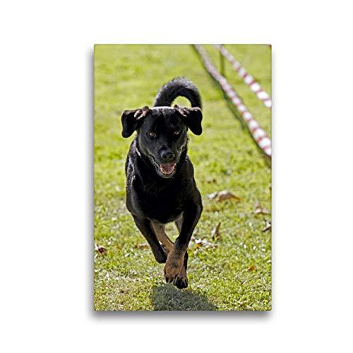 Premium Textil-Leinwand 30 x 45 cm Hoch-Format Rennender Hund | Wandbild, HD-Bild auf Keilrahmen, Fertigbild auf hochwertigem Vlies, Leinwanddruck von Martina Berg