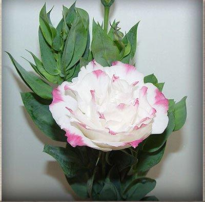 Heißer Verkaufs-7 Farben erhältlich Eustoma Samen Staudenblütenpflanzen Topfpflanzen Blumen-Samen Lisianthus Samen 120PCS