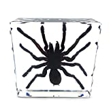 Spider Specimen in Acrylic Block Paperweights Science Classroom Specimens for Science Education(3x3x1 Inch)