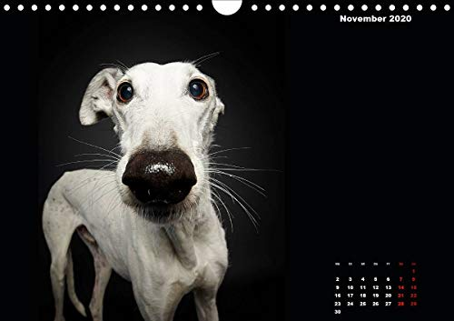 『Gier, M: Stimme der Windhunde (Wandkalender 2020 DIN A4 quer』の12枚目の画像