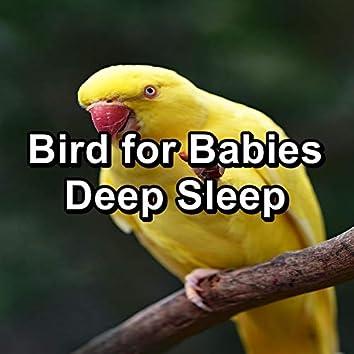Bird for Babies Deep Sleep