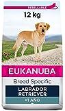 EUKANUBA Breed Specific Alimento seco para perros labrador retriever adultos, alimento para perros óptimamente adaptado a la raza 12 kg