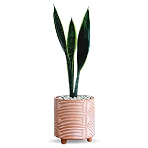 Carlton Lane Terracotta Pot Look – 6-Inch Clay Plant Pot with Drainage Holes Terra Cotta Style and Chic Design – Succulent and Cactus Nursery Planter for Home, Office, Café – Terracotta White Stripe