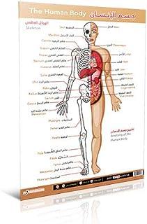 (جسم الإنسان (عربي - إنجليزي