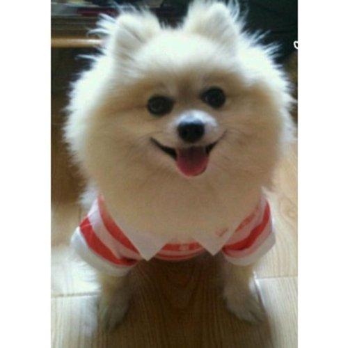 HuntGold 100% design de mode en coton rayé coloré t-shirt pour chien(rouge Taille: L)