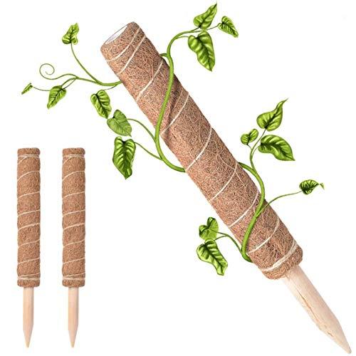 Dnazyrety 2 Stück Pflanzstab Kokos Rankstab, Moosstab Für Monstera Kletterpflanzen,Haus Garten Kletterpflanze Erweiterung (16inch)