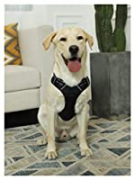 ZYHWS ペットアクセサリーハスキーアラスカキャラクターベストヴェテテープテープトーバーバンドチューニングタイトル反射媒体と犬 (Color : Black, Size : M)