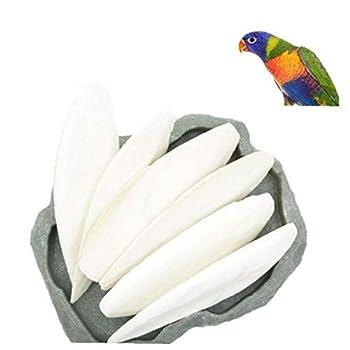 BYFRI 1pc Animaux Oiseau Poisson Nourriture pour Oiseaux Os De Seiche Calcium Pickstone Seiche Sepia Os Oiseaux Pratiques Dents Grind Formation