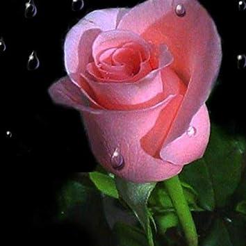 Un Trandafir Creste (feat. Pindu)