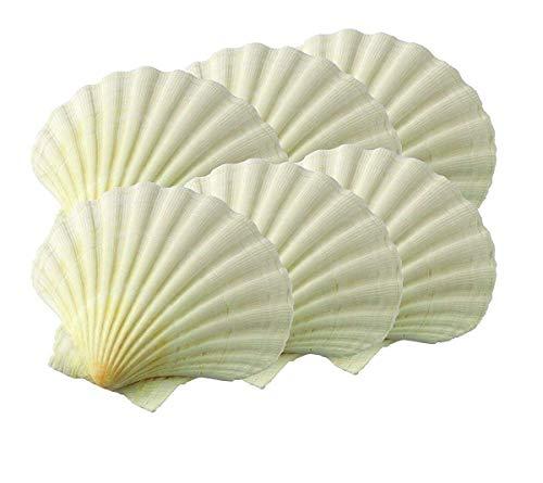 Set of 6 Natural King Scallop Baking Shells, 3 ¼ inch (Pack of two)-Bakeware sets-Baking supplies-Baking pan-Cake pan-Baking pans-Baking sheets-Cookie sheets for baking-Baking dish