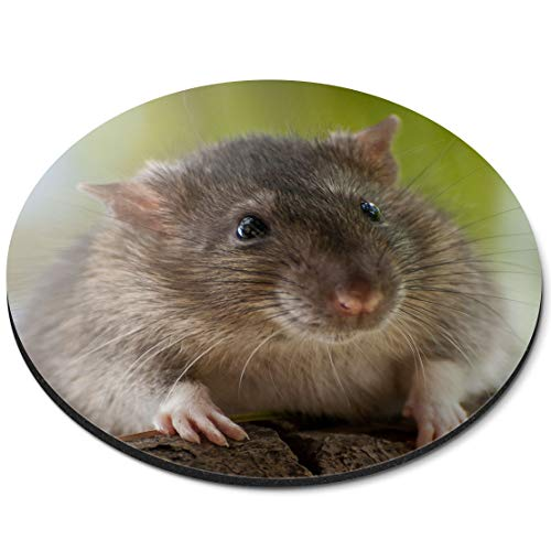 Cute Fancy Rat Mouse Mat Pad Pet Rats Rodent Mouse Animal Gift Computer #14158