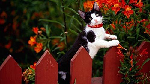 YINGXINXWM DIY Malen Nach Zahlen Leinwand Anfänger Kinder Wohnzimmerdekoration,Katze Zaun Kragen Klettern Blumen,Handgemalt Kit 40X50Cm(Ohne Rahmen)