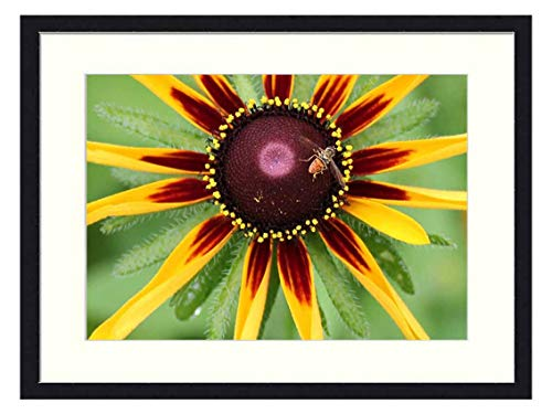 OiArt Wall Art Print Wood Framed Home Decor Picture Artwork(24x16 inch) - Nature Summer Flora Bright Beneficial Insects