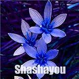 bloom green co. saldi! 100 pezzi zephyranthes candida bonsai (cipolla orchid) mini zephyr lily piantare balcone indoor fioritura delle piante per il giardino domestico: 5