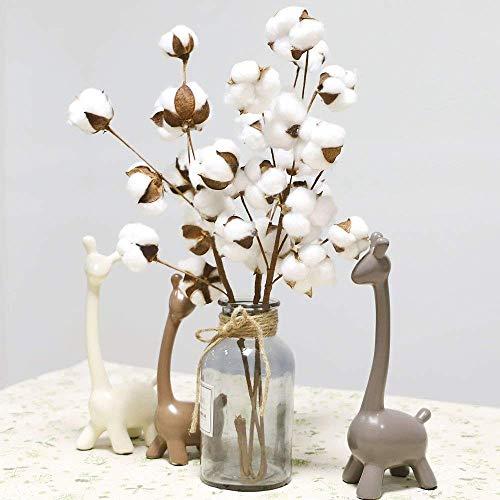 FeiliandaJJ 21 Zoll 3Pc 30 Köpfe Getrocknete Blume Natürlicher Baumwollzweig Bauernhaus-Stil Künstliche Blume Füller Blumendekor für Wohnzimmer Home (Weiß)