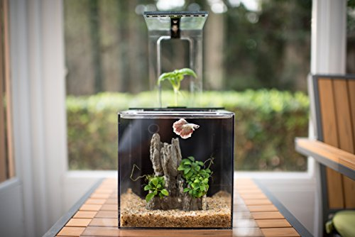 Decorative EcoQube fish tank