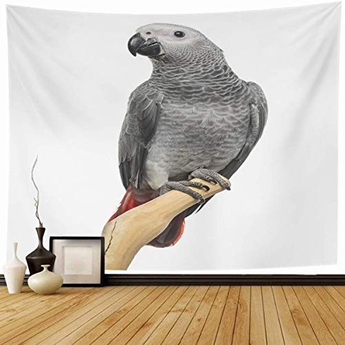 Tapestry Wall Hanging Perched African Grey Parrot Months Old Shot Bird Cut Domestic Erithacus Nobody Home Decor Tapestries Decorative Bedroom Living Room Dorm