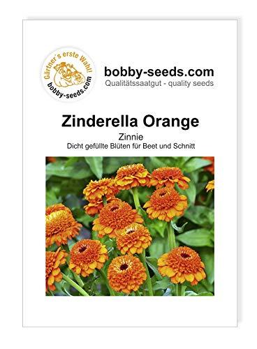 Zinderella Orange Zinnien Samen von Bobby-Seeds Portion