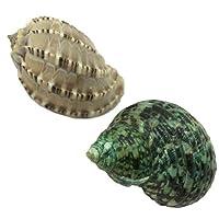 オカヤドカリ用貝がら Lサイズ レギュラー 2個