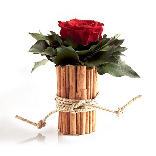 ROSEMARIE SCHULZ Heidelberg Blumengesteck mit Zimtbecher und 1 Rose konserviert haltbar 3 Jahre Rosengesteck/Blumengesteck/Landhaus/Blumen Deko (Rot)