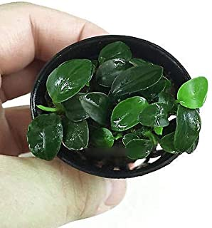 Erfly Houseplant Care on dwarf umbrella tree care, landscaping care, pets care, geraniums care, plant care, african violets care, flower care,
