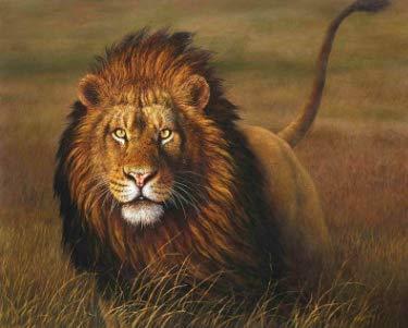 NOBRAND Pintura Digital DIY Kit de Pintura al óleo para Adultos y niños Art Deco según número Dibujar Animal león 40X50cm sin Marco XIAOTANGYUAN