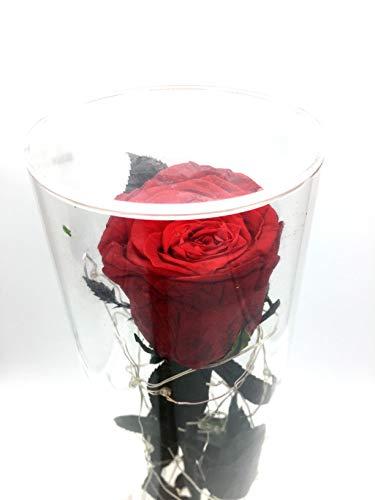 Forever Rose with Long Stem and Light Strings | Natural Preserved Rose Forever Flower Lamp | Eternal Rose Flower String Lights in Acrylic Tube | New Design Beauty and Beast Rose | Best Present For Her