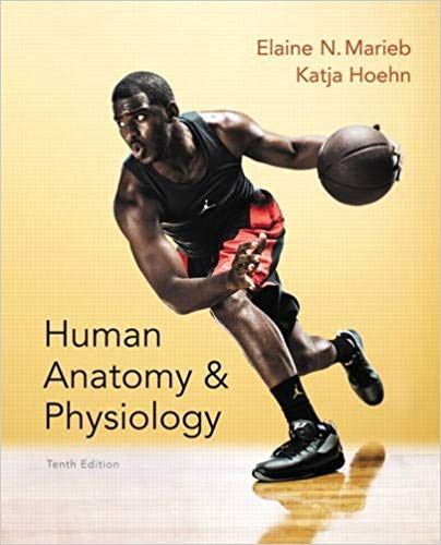 by Elaine N. Marieband Katja Hoehn - Human Anatomy & Physiology (Marieb, Human Anatomy & Physiology) Standalone Book (Hardcover) Pearson; 10th Edition (January 3, 2015) - [Bargain Books]