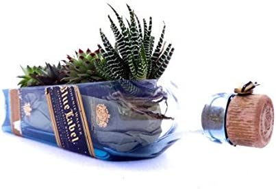Succulent Planter Bowl made Dallas Mall from Walker Bottl Johnnie Blue label Direct stock discount
