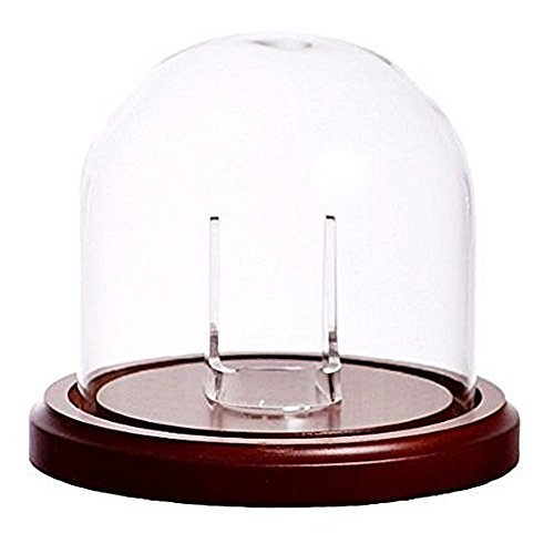 Large 4'x4' Glass Cloche Pocket Watch Display Dome with Walnut Stained Wood Base