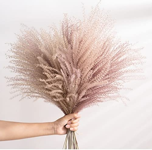 Thecookie 15Pcs Lot White Pampas A surprise price is realized Classic Dried Artificial Natural Grass