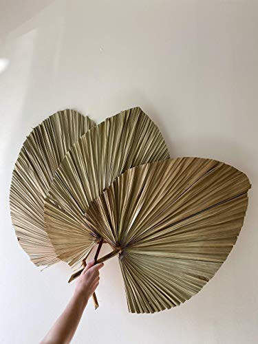3 pcs Large Palm Leaves Dried Organic 30'' - Dried Palm Spears Boho Home Decor Wedding Decor DIY