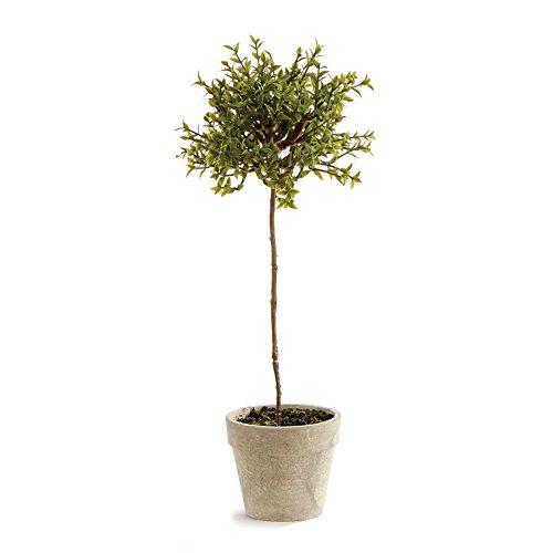 Napa Home & Garden Thyme Topiary 13'